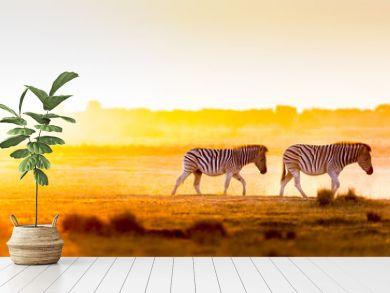 Africa Sunset Landscape