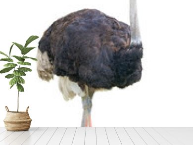African two-toed ostrich cutout