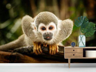 Squirrel monkey in ecuadorian jungle