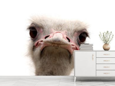 ostrich isolated on white