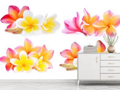 set of white and pink frangipani (plumeria) flower isolated on white background