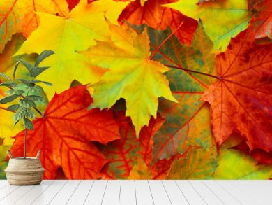 Beautiful Nature autumn Background with fallen maple leaves