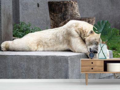 A polar bear rests on a stone