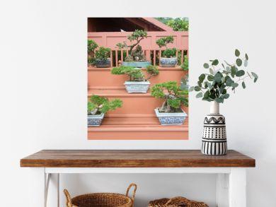 bonsai plants in pot
