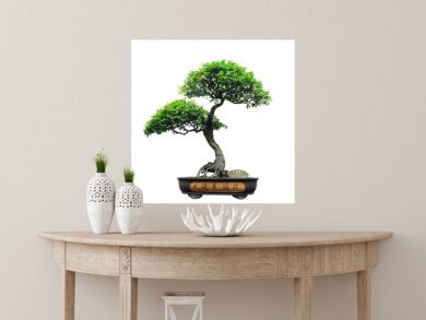 Chinese green bonsai tree Isolated on white background.